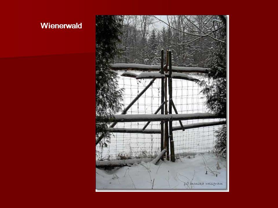 Somogyi-Hof Wien-Penzing