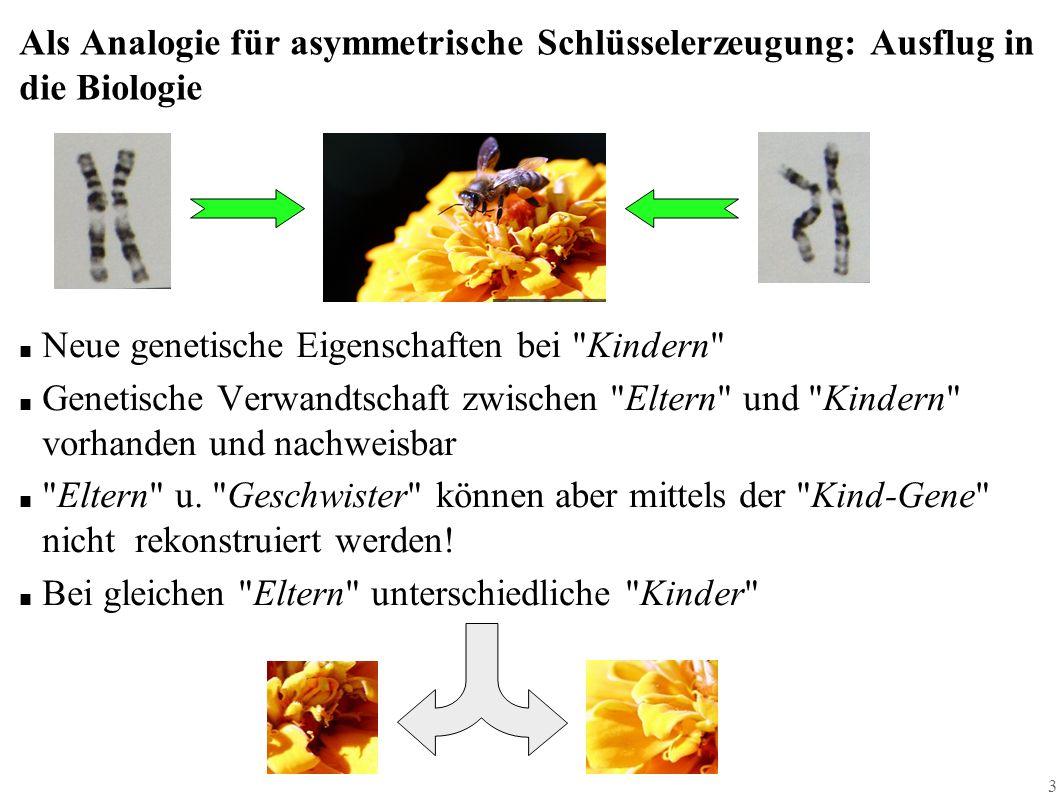 3 Als Analogie für asymmetrische Schlüsselerzeugung: Ausflug in die Biologie ■ Neue genetische Eigenschaften bei