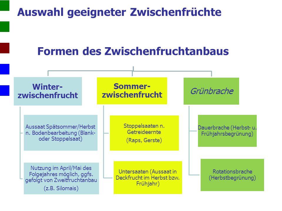 Zwischenfrüchte als Krankheitsüberträger Kohlhernie Erreger: Plasmodiophora brassicae (einzellige Lebewesen) Wirtspflanzen: Kreuzblütengewächse (u.a.