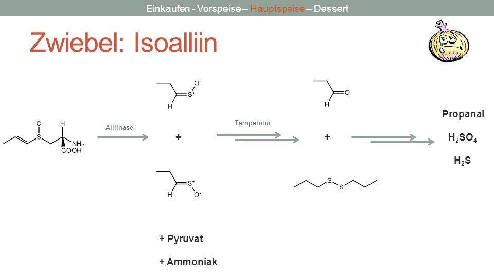 Einkaufen - Vorspeise – Hauptspeise – Dessert Zwiebel: Isoalliin Alliinase + Temperatur + + Pyruvat + Ammoniak Propanal H 2 SO 4 H 2 S