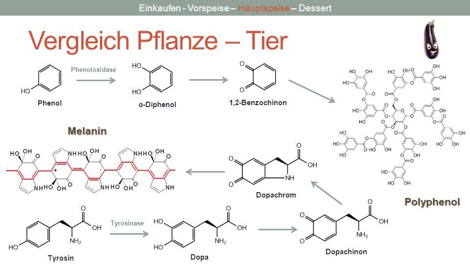 Einkaufen - Vorspeise – Hauptspeise – Dessert Vergleich Pflanze – TierMelanin Dopa TyrosinDopachinon Dopachrom Phenol o-Diphenol 1,2-Benzochinon Polyp