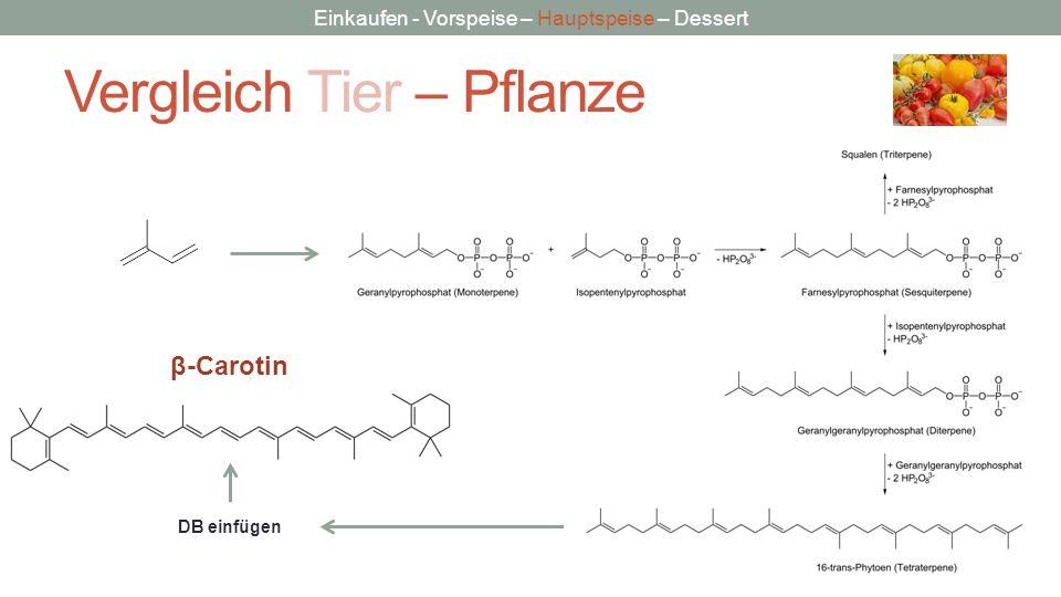 Einkaufen - Vorspeise – Hauptspeise – Dessert Vergleich Tier – Pflanze DB einfügen β-Carotin