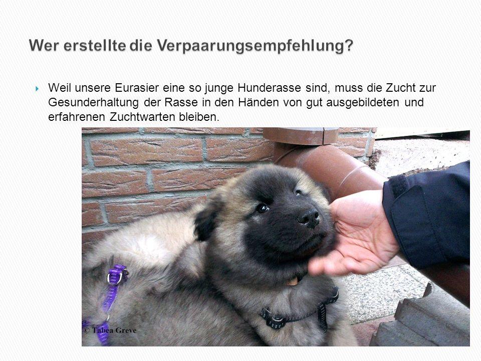  Weil unsere Eurasier eine so junge Hunderasse sind, muss die Zucht zur Gesunderhaltung der Rasse in den Händen von gut ausgebildeten und erfahrenen Zuchtwarten bleiben.