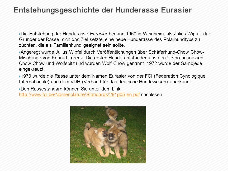  Die Entstehung der Hunderasse Eurasier begann 1960 in Weinheim, als Julius Wipfel, der Gründer der Rasse, sich das Ziel setzte, eine neue Hunderasse des Polarhundtyps zu züchten, die als Familienhund geeignet sein sollte.