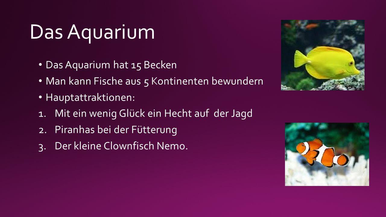 Das Aquarium Das Aquarium hat 15 Becken Man kann Fische aus 5 Kontinenten bewundern Hauptattraktionen: 1.Mit ein wenig Glück ein Hecht auf der Jagd 2.