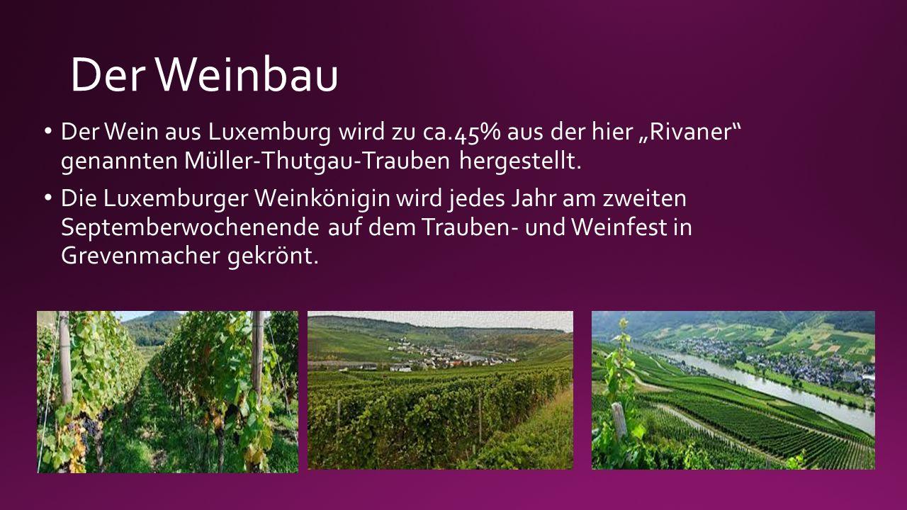 """Der Weinbau Der Wein aus Luxemburg wird zu ca.45% aus der hier """"Rivaner"""" genannten Müller-Thutgau-Trauben hergestellt. Die Luxemburger Weinkönigin wir"""