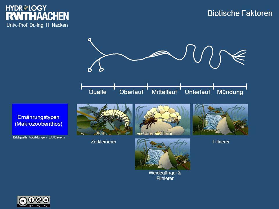 Univ.-Prof. Dr.-Ing. H. Nacken Zerkleinerer Weidegänger & Filtrierer Filtrierer QuelleOberlaufMittellaufUnterlaufMündung Biotische Faktoren Bildquelle