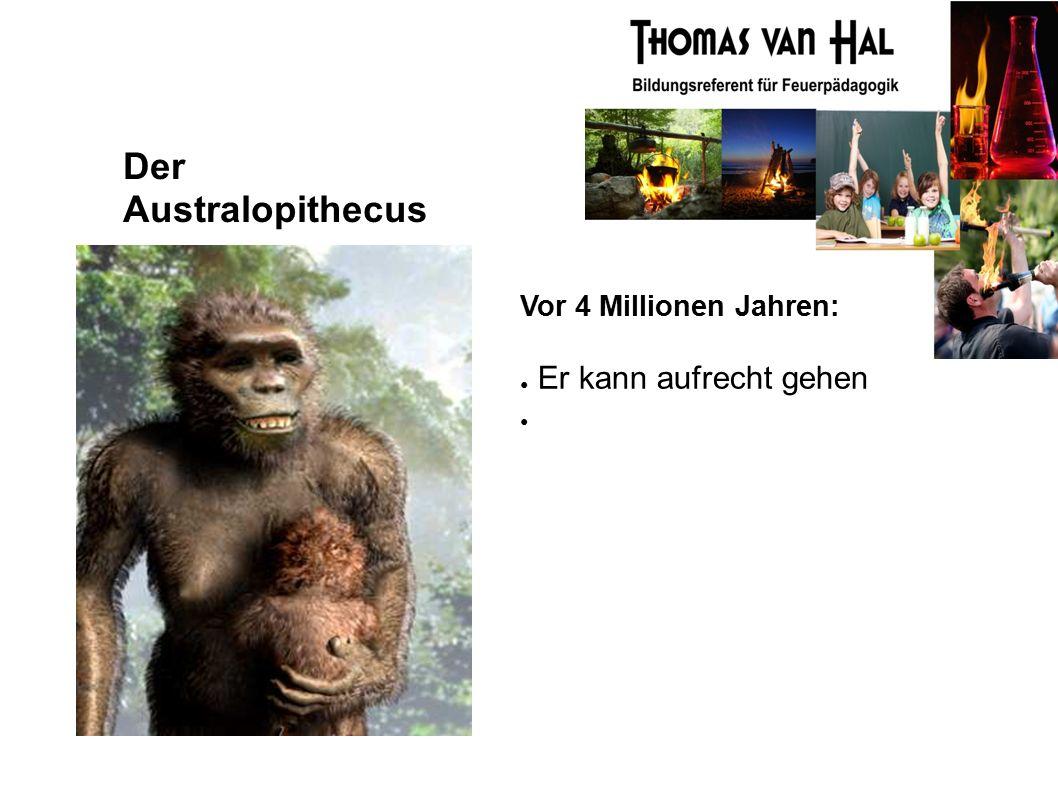 Der Australopithecus Vor 4 Millionen Jahren: ● Er kann aufrecht gehen ●
