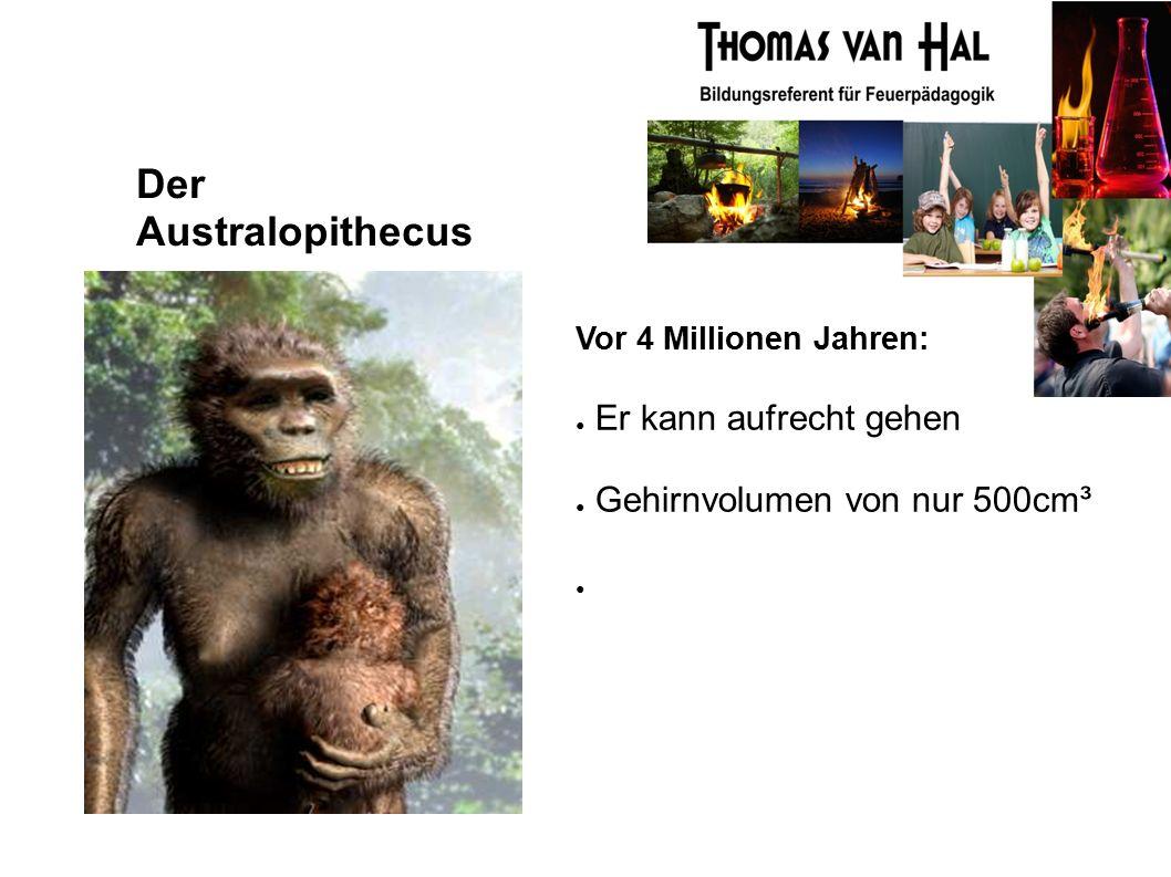Der Australopithecus Vor 4 Millionen Jahren: ● Er kann aufrecht gehen ● Gehirnvolumen von nur 500cm³ ●