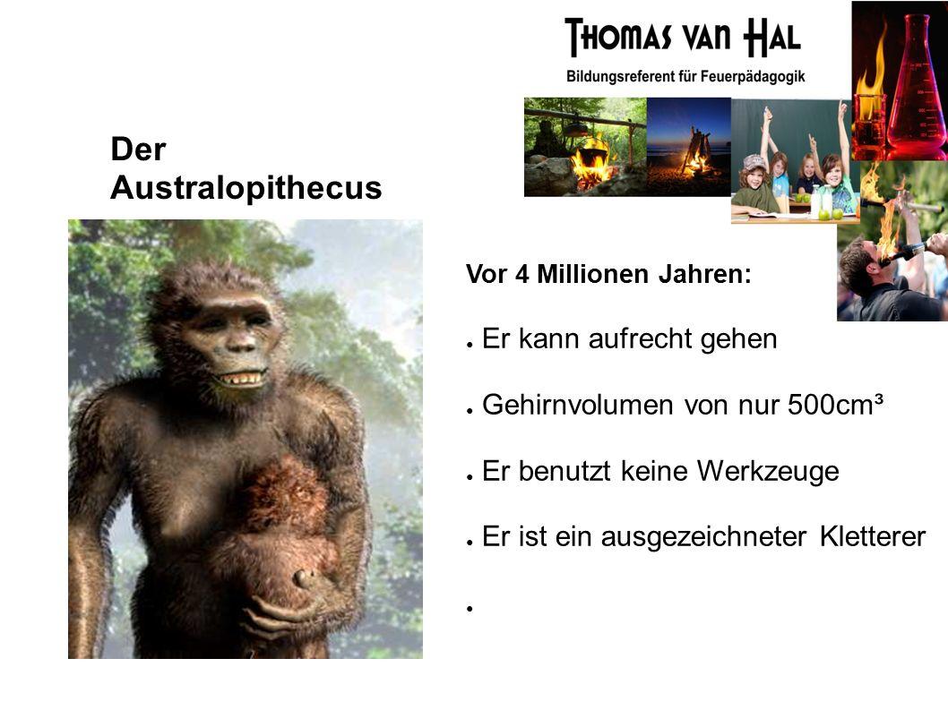 Der Australopithecus Vor 4 Millionen Jahren: ● Er kann aufrecht gehen ● Gehirnvolumen von nur 500cm³ ● Er benutzt keine Werkzeuge ● Er ist ein ausgezeichneter Kletterer ●