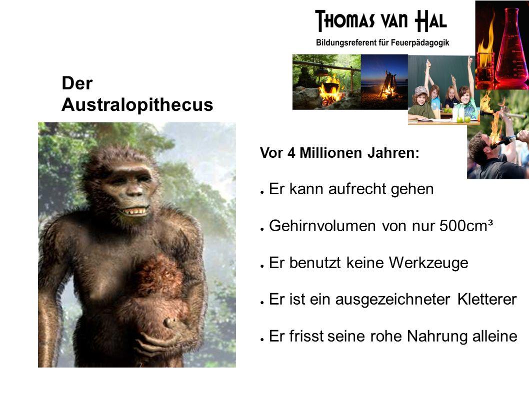 Der Australopithecus Vor 4 Millionen Jahren: ● Er kann aufrecht gehen ● Gehirnvolumen von nur 500cm³ ● Er benutzt keine Werkzeuge ● Er ist ein ausgezeichneter Kletterer ● Er frisst seine rohe Nahrung alleine