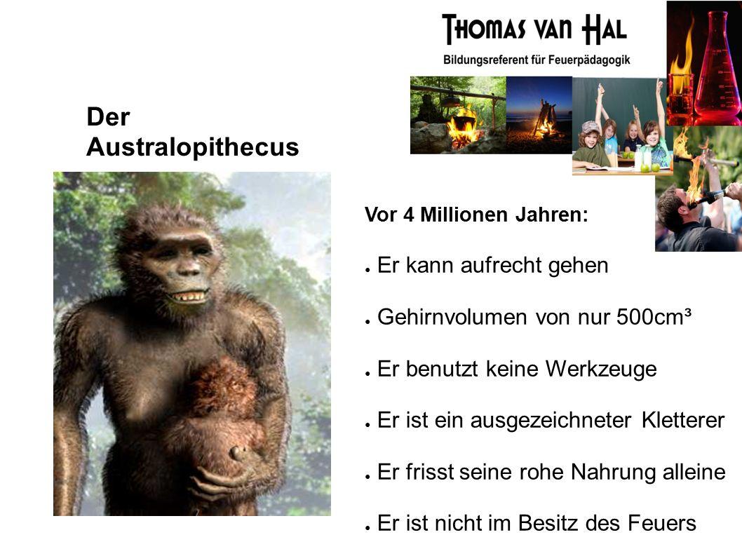 Der Australopithecus Vor 4 Millionen Jahren: ● Er kann aufrecht gehen ● Gehirnvolumen von nur 500cm³ ● Er benutzt keine Werkzeuge ● Er ist ein ausgezeichneter Kletterer ● Er frisst seine rohe Nahrung alleine ● Er ist nicht im Besitz des Feuers