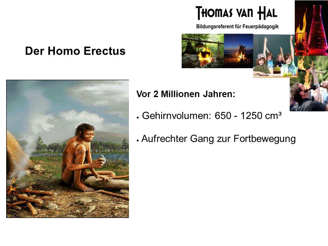 Der Homo Erectus Vor 2 Millionen Jahren: ● Gehirnvolumen: 650 - 1250 cm³ ● Aufrechter Gang zur Fortbewegung
