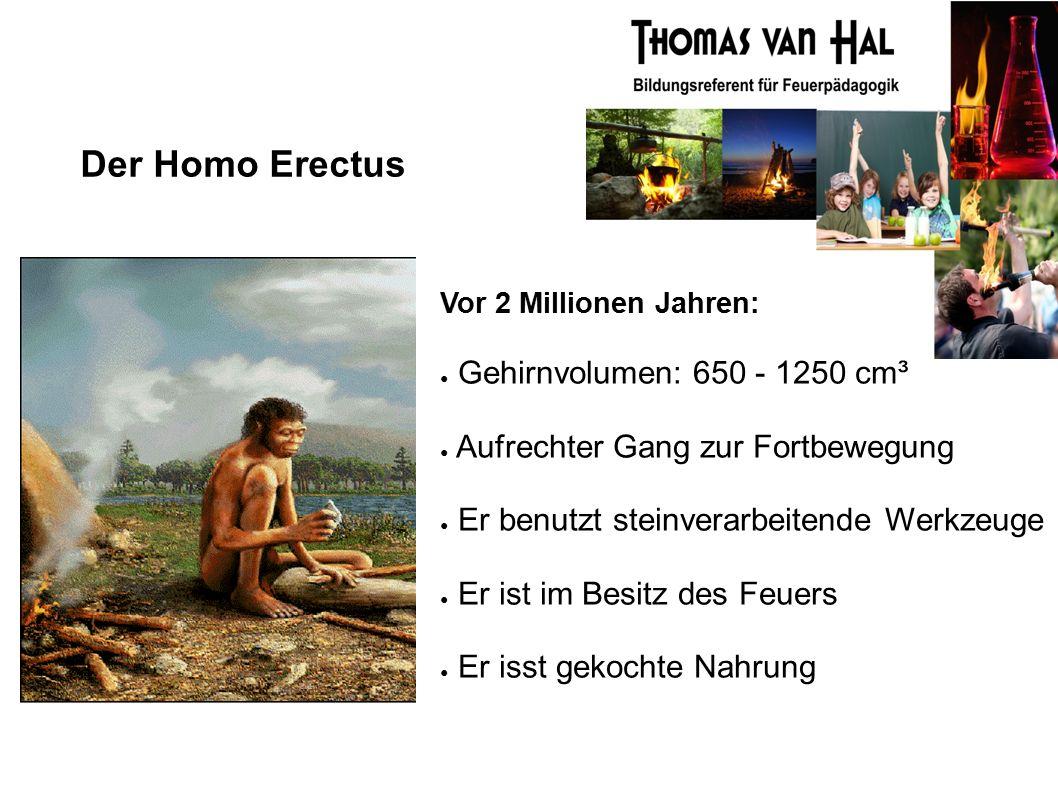 Der Homo Erectus Vor 2 Millionen Jahren: ● Gehirnvolumen: 650 - 1250 cm³ ● Aufrechter Gang zur Fortbewegung ● Er benutzt steinverarbeitende Werkzeuge ● Er ist im Besitz des Feuers ● Er isst gekochte Nahrung