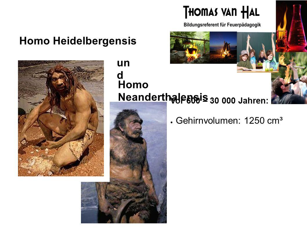 Homo Heidelbergensis Homo Neanderthalensis Vor 600 – 30 000 Jahren: ● Gehirnvolumen: 1250 cm³ un d