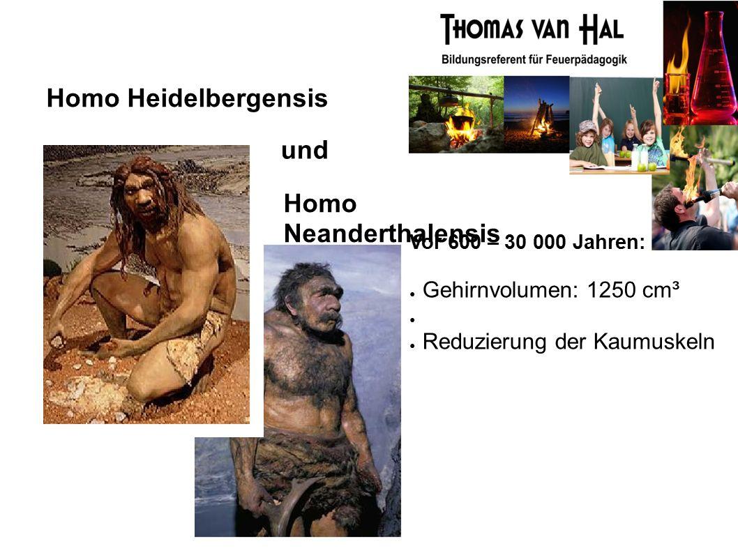 Homo Heidelbergensis Homo Neanderthalensis Vor 600 – 30 000 Jahren: ● Gehirnvolumen: 1250 cm³ ● ● Reduzierung der Kaumuskeln und