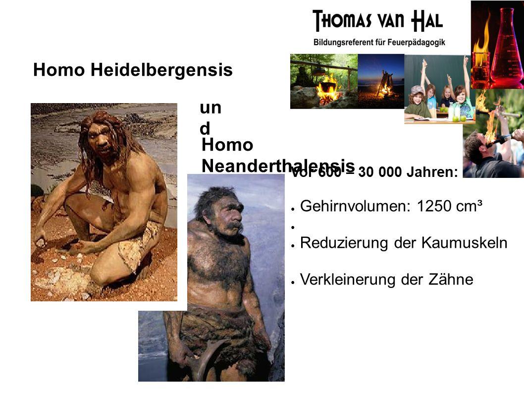 Homo Heidelbergensis Homo Neanderthalensis Vor 600 – 30 000 Jahren: ● Gehirnvolumen: 1250 cm³ ● ● Reduzierung der Kaumuskeln ● Verkleinerung der Zähne un d