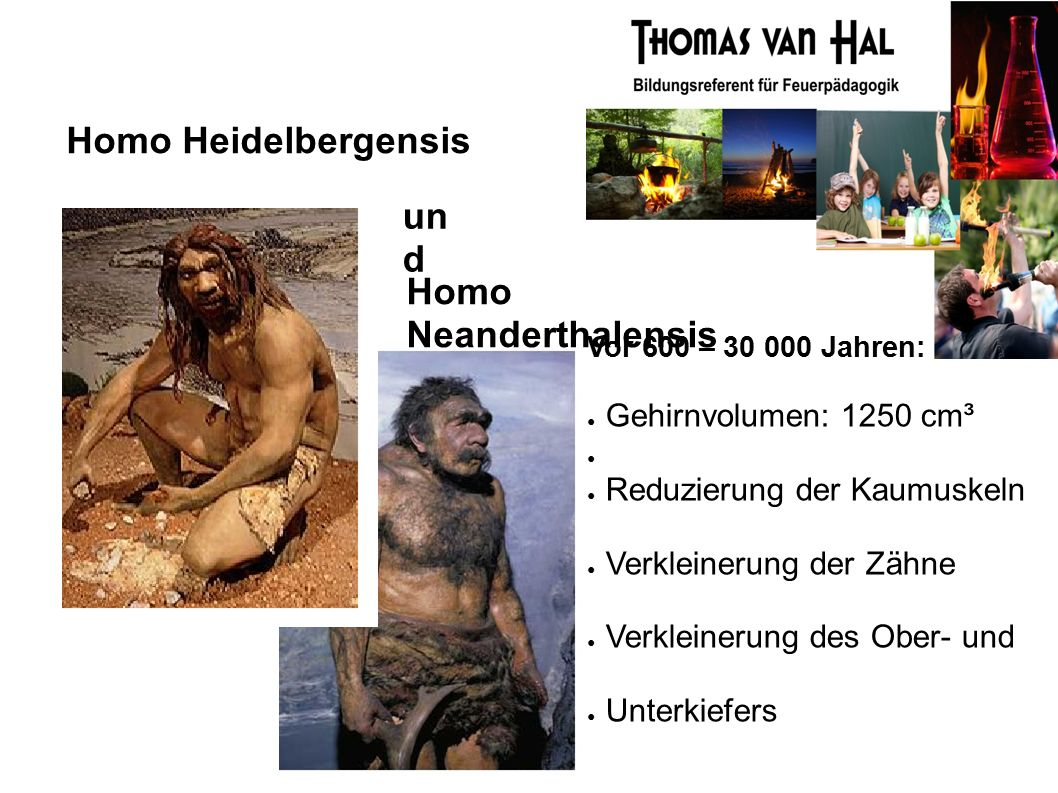 Homo Heidelbergensis Homo Neanderthalensis Vor 600 – 30 000 Jahren: ● Gehirnvolumen: 1250 cm³ ● ● Reduzierung der Kaumuskeln ● Verkleinerung der Zähne ● Verkleinerung des Ober- und ● Unterkiefers un d