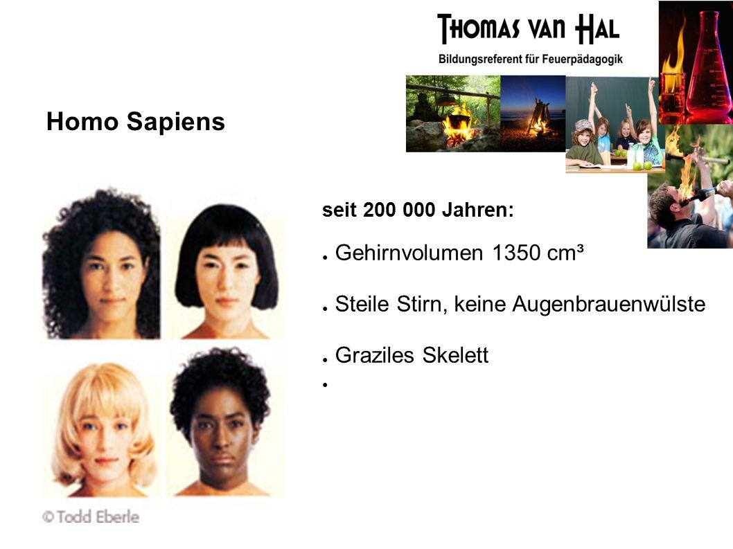 Homo Sapiens seit 200 000 Jahren: ● Gehirnvolumen 1350 cm³ ● Steile Stirn, keine Augenbrauenwülste ● Graziles Skelett ●