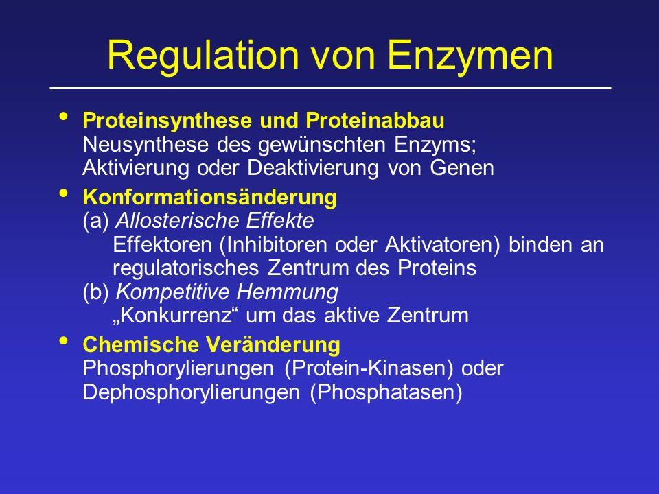 Regulation von Enzymen Proteinsynthese und Proteinabbau Neusynthese des gewünschten Enzyms; Aktivierung oder Deaktivierung von Genen Konformationsände