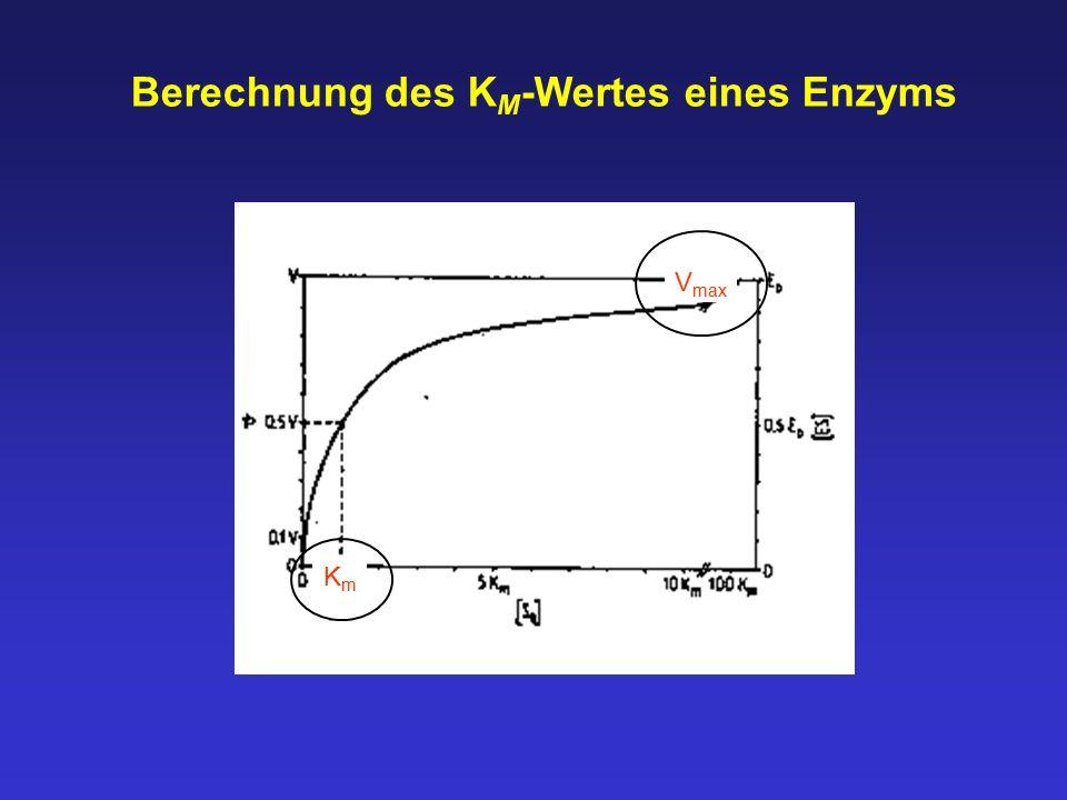 Berechnung des K M -Wertes eines Enzyms V max KmKm