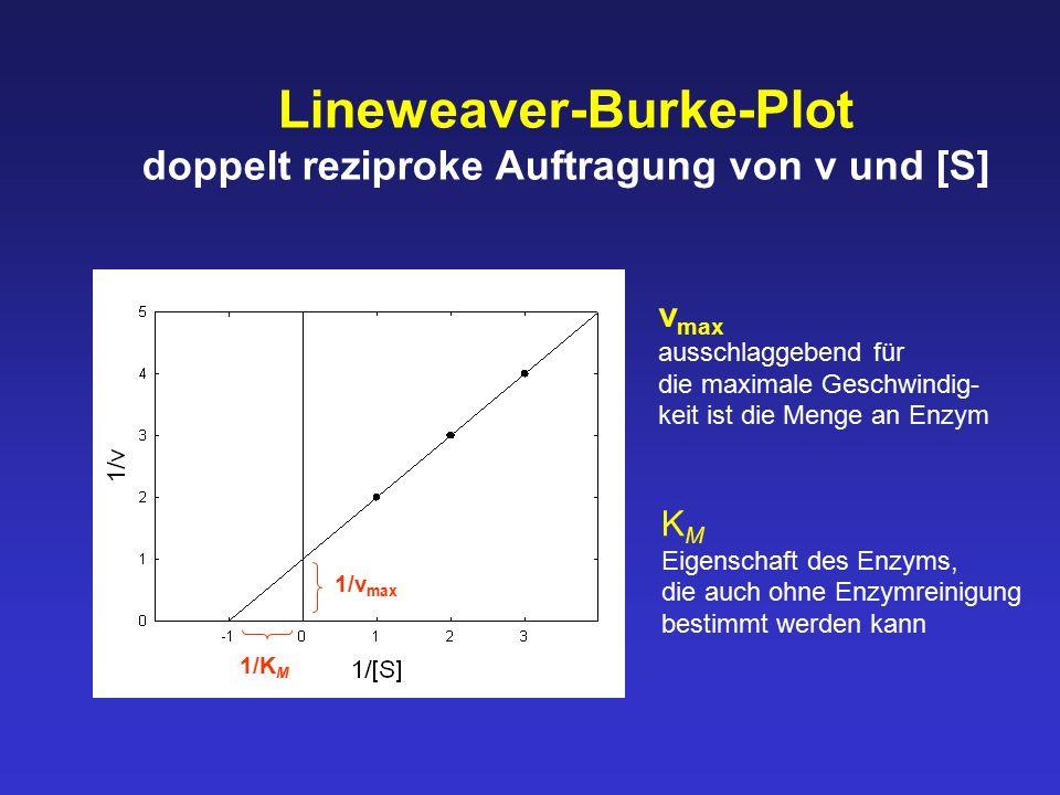 Lineweaver-Burke-Plot doppelt reziproke Auftragung von v und [S] 1/v max 1/K M v max ausschlaggebend für die maximale Geschwindig- keit ist die Menge