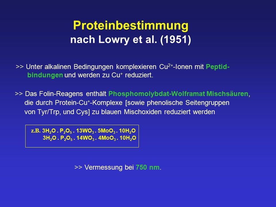 Proteinbestimmung nach Lowry et al. (1951) >> Unter alkalinen Bedingungen komplexieren Cu 2+ -Ionen mit Peptid- bindungen und werden zu Cu + reduziert
