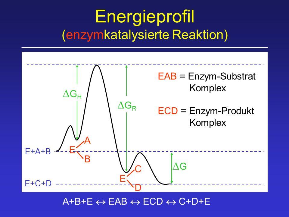 Enzymkatalysierte Reaktionen benötigen geringere Aktivierungsenergie, weil: Näherungseffekt räumlich richtige Ausrichtung der Substrate durch Bindung an Enzym Milieueffekt optimale Bedingungen für Reaktion am Enzym (pH, Solvatisierung, etc) Konformationsstreckungseffekt durch Substratbindung Gestaltänderung des Enzyms (Übergangszustand)