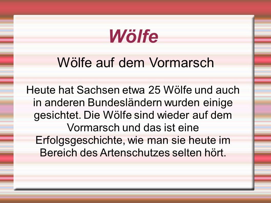 Wölfe Wölfe auf dem Vormarsch Heute hat Sachsen etwa 25 Wölfe und auch in anderen Bundesländern wurden einige gesichtet.