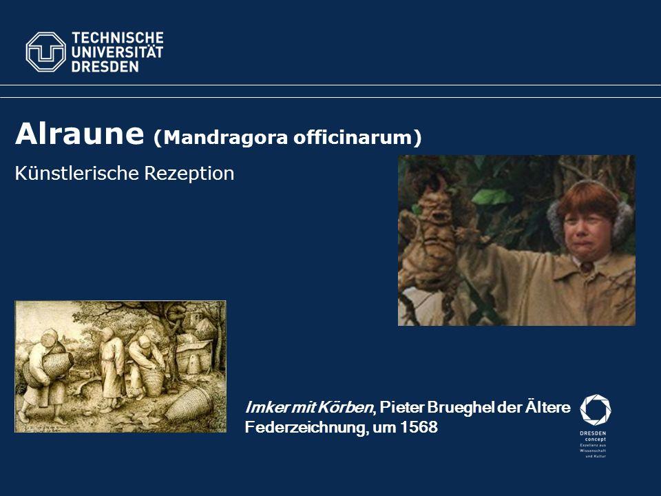 Alraune (Mandragora officinarum) Künstlerische Rezeption Imker mit Körben, Pieter Brueghel der Ältere Federzeichnung, um 1568