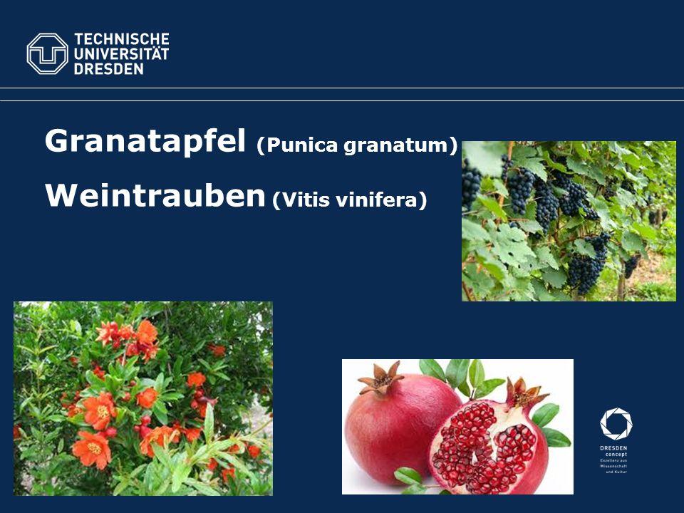 Granatapfel (Punica granatum) Weintrauben (Vitis vinifera)
