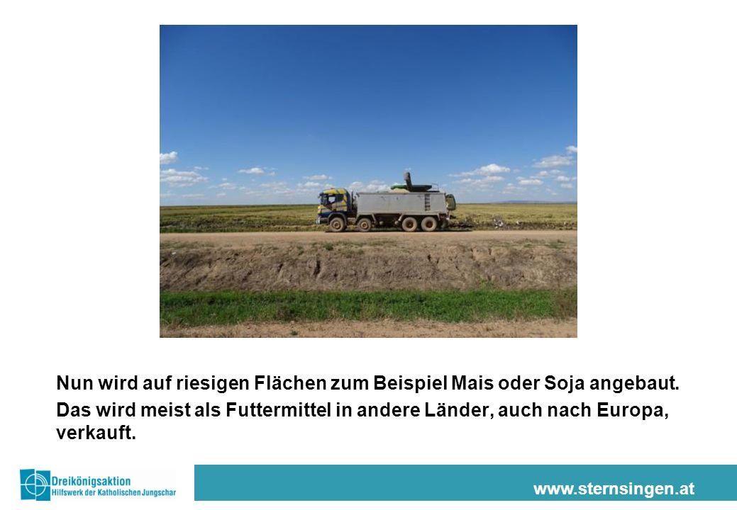Nun wird auf riesigen Flächen zum Beispiel Mais oder Soja angebaut.