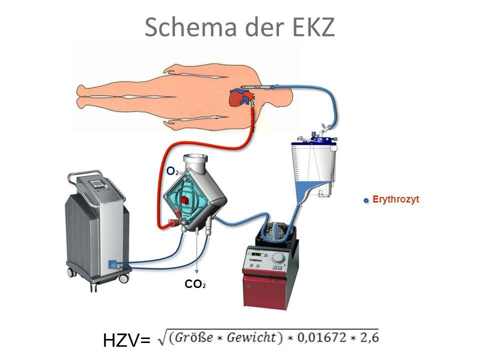 Erythrozyt Schema der EKZ CO 2 O2O2 HZV=