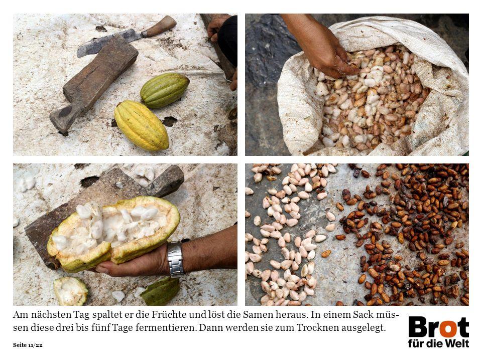 Seite 11/22 Am nächsten Tag spaltet er die Früchte und löst die Samen heraus.
