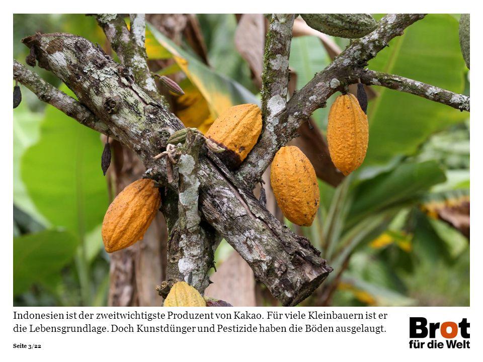 Seite 3/22 Indonesien ist der zweitwichtigste Produzent von Kakao.