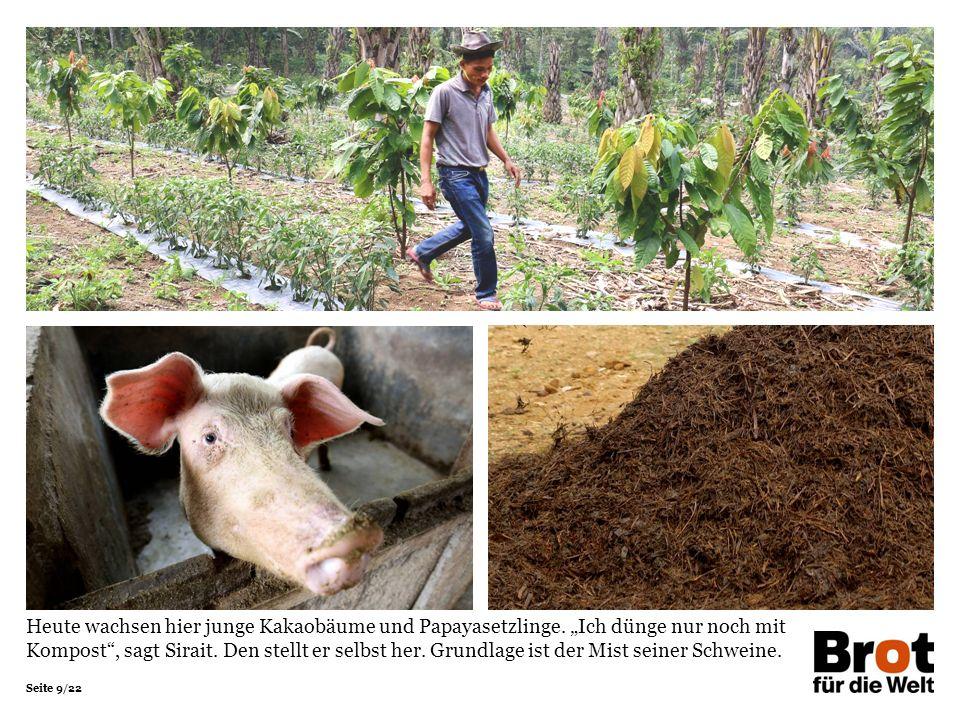 Seite 9/22 Heute wachsen hier junge Kakaobäume und Papayasetzlinge.