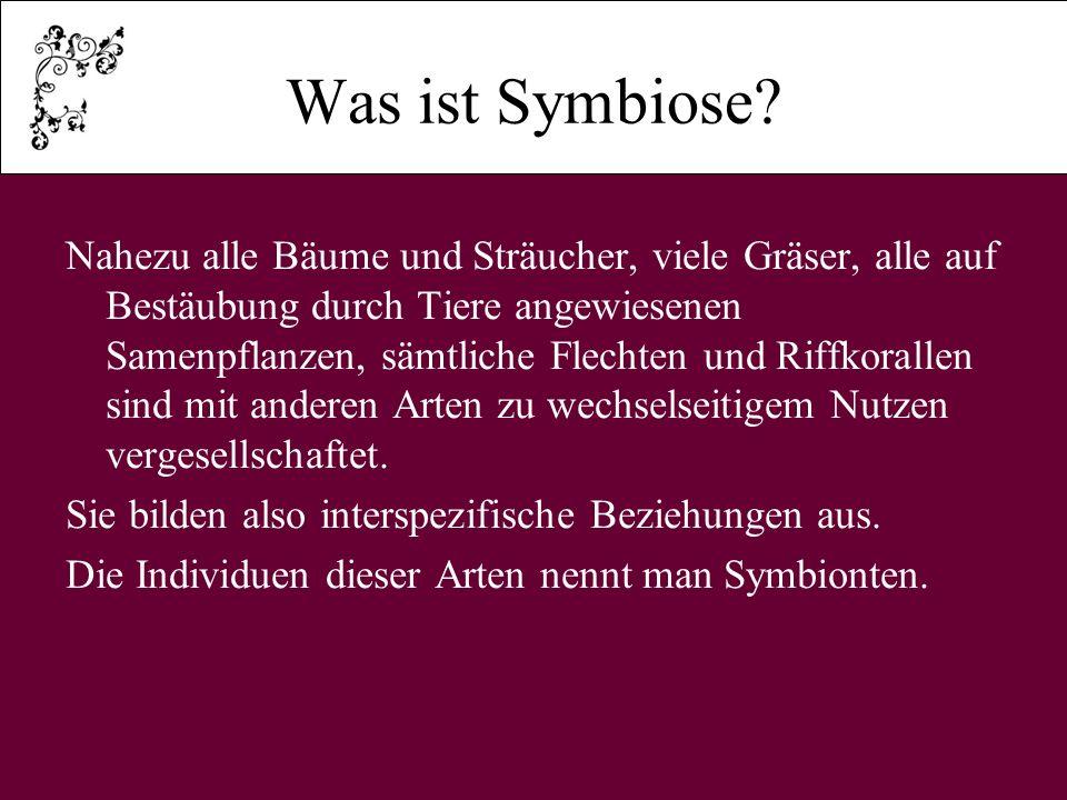 Was ist Symbiose.