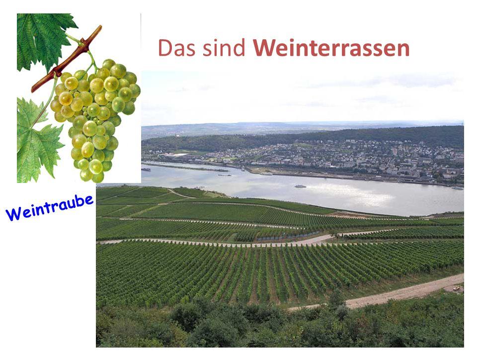 Das sind Weinterrassen Weintraube