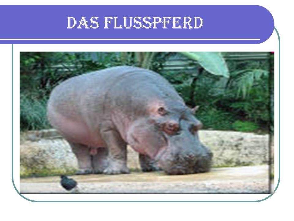 Das Flusspferd