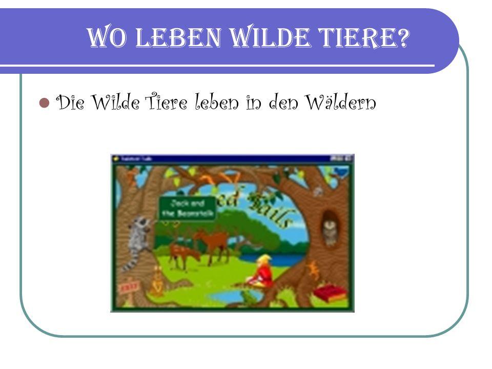 Wo leben wilde Tiere Die Wilde Tiere leben in den Wäldern
