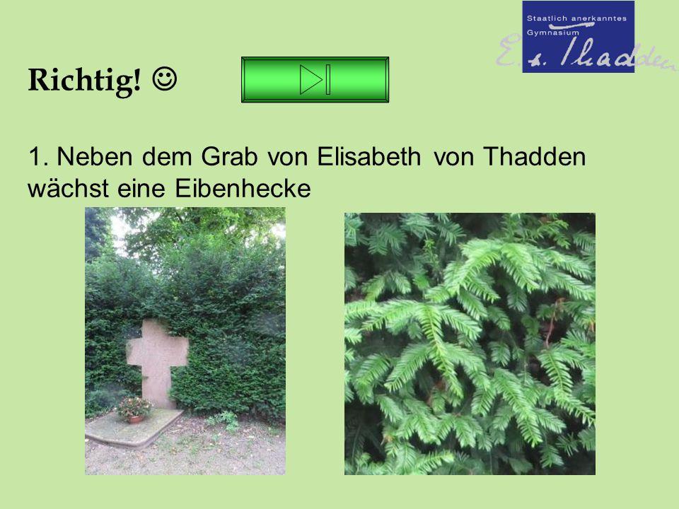 Richtig! 1. Neben dem Grab von Elisabeth von Thadden wächst eine Eibenhecke