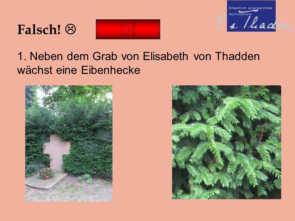 Falsch!  1. Neben dem Grab von Elisabeth von Thadden wächst eine Eibenhecke