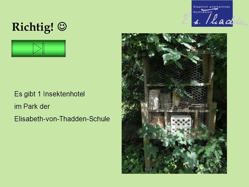 Richtig! Es gibt 1 Insektenhotel im Park der Elisabeth-von-Thadden-Schule