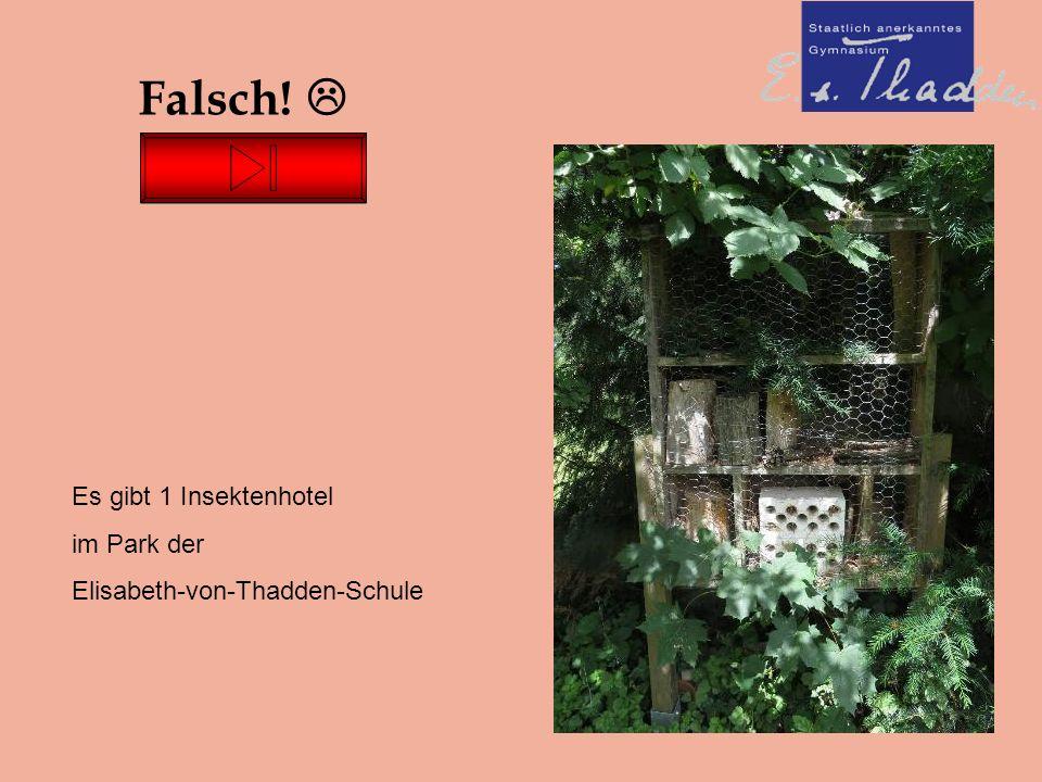 Falsch!  Es gibt 1 Insektenhotel im Park der Elisabeth-von-Thadden-Schule