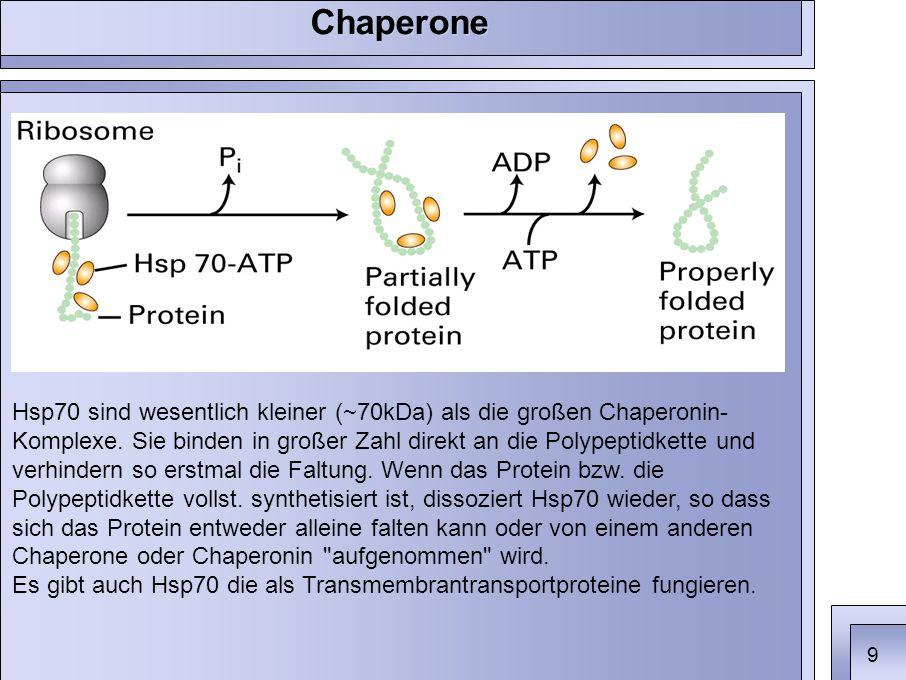 Hsp70 sind wesentlich kleiner (~70kDa) als die großen Chaperonin- Komplexe.