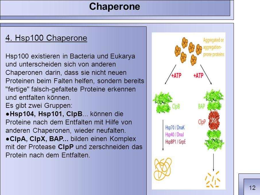 4. Hsp100 Chaperone Hsp100 existieren in Bacteria und Eukarya und unterscheiden sich von anderen Chaperonen darin, dass sie nicht neuen Proteinen beim