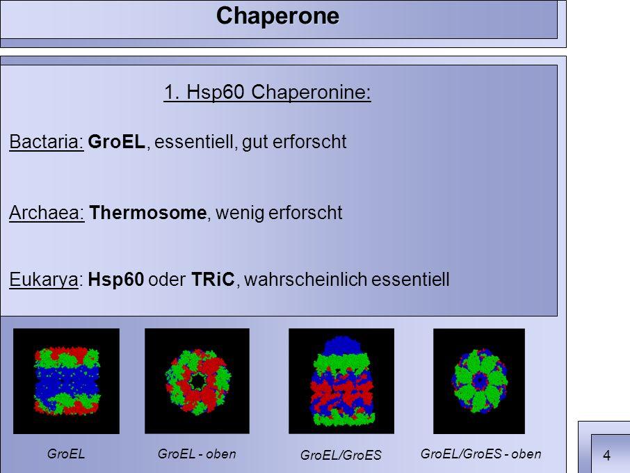1. Hsp60 Chaperonine: Bactaria: GroEL, essentiell, gut erforscht Archaea: Thermosome, wenig erforscht Eukarya: Hsp60 oder TRiC, wahrscheinlich essenti