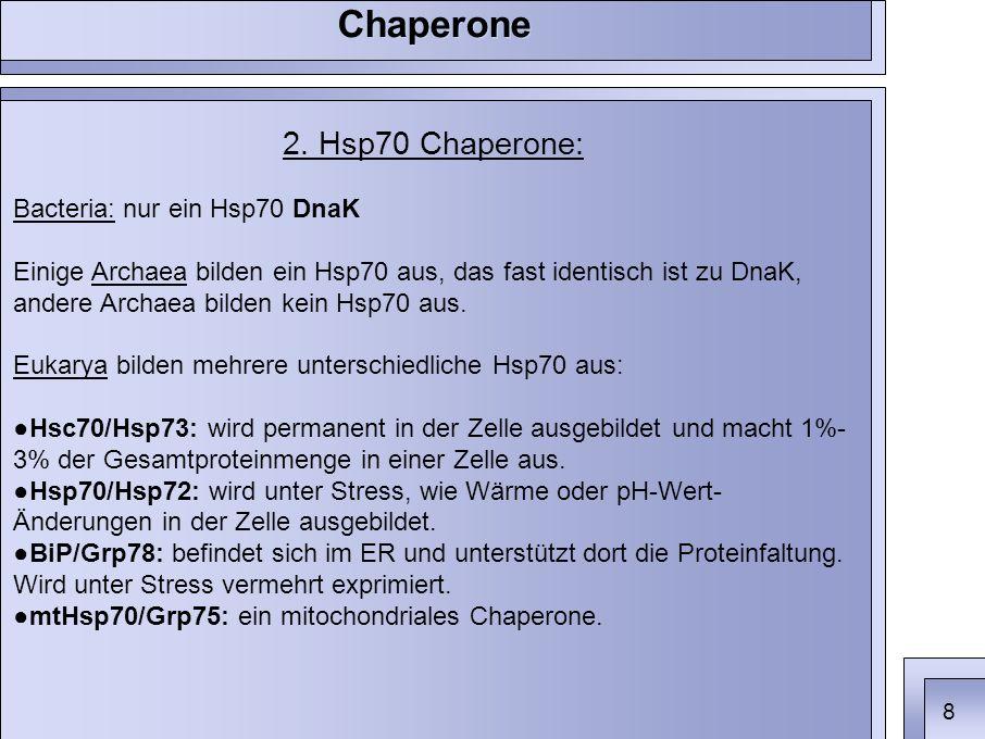 2. Hsp70 Chaperone: Bacteria: nur ein Hsp70 DnaK Einige Archaea bilden ein Hsp70 aus, das fast identisch ist zu DnaK, andere Archaea bilden kein Hsp70
