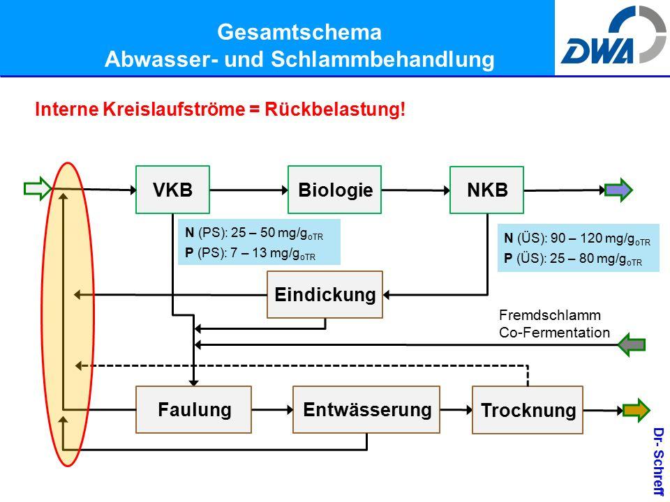 Dr- Schreff Gesamtschema Abwasser- und Schlammbehandlung VKBBiologie NKB Eindickung FaulungEntwässerung Trocknung Interne Kreislaufströme = Rückbelastung.