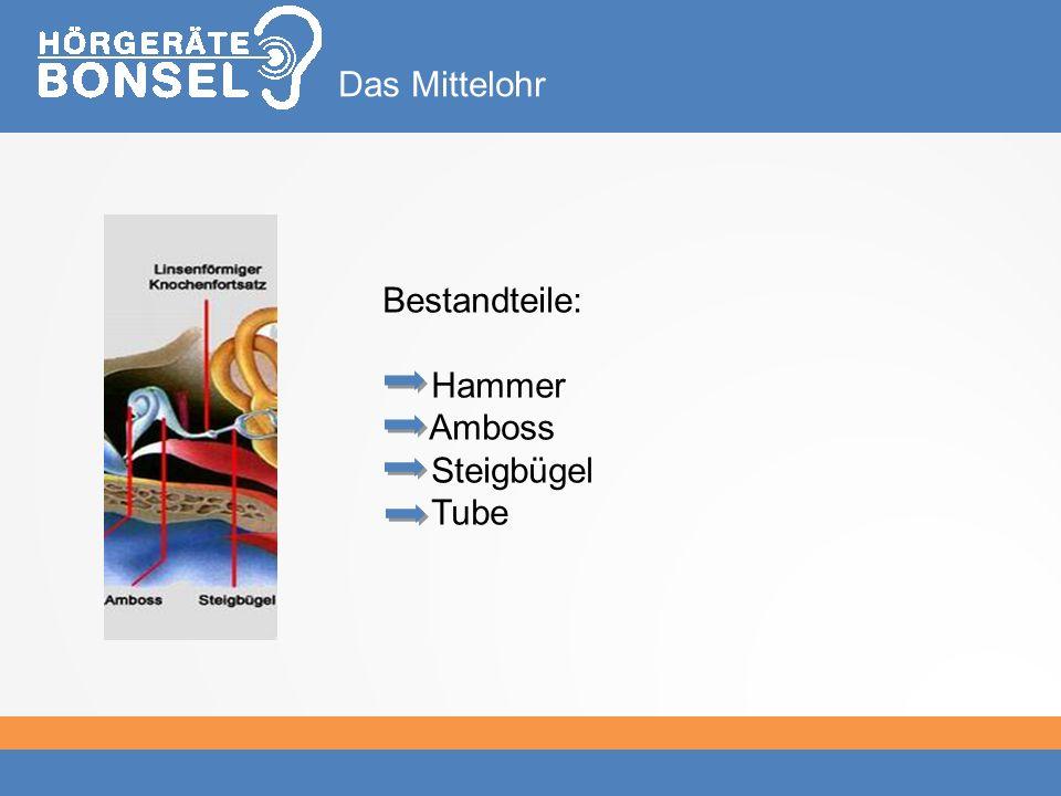Bestandteile: Hammer Amboss Steigbügel Tube Das Mittelohr